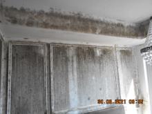 Mouldy Walls 2021